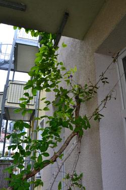 balkon gestalten sch ner balkon. Black Bedroom Furniture Sets. Home Design Ideas